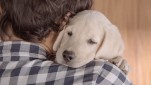 Better Fetch a Tissue Before Watching Budweiser's New Drinking and Driving PSA