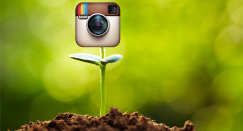 Instagram Captures Attention as Fastest-Growing Social Media Network