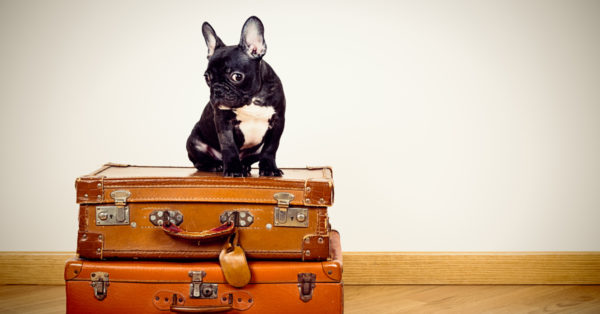 Have Pets Made Luxury Hotels Go to the Dogs?